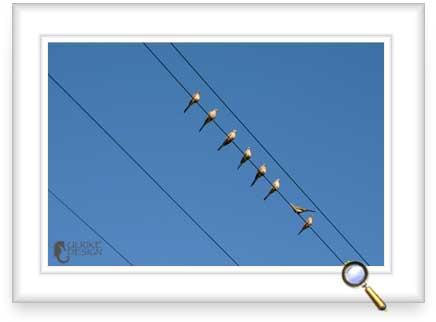 Mourning Doves on a wire.