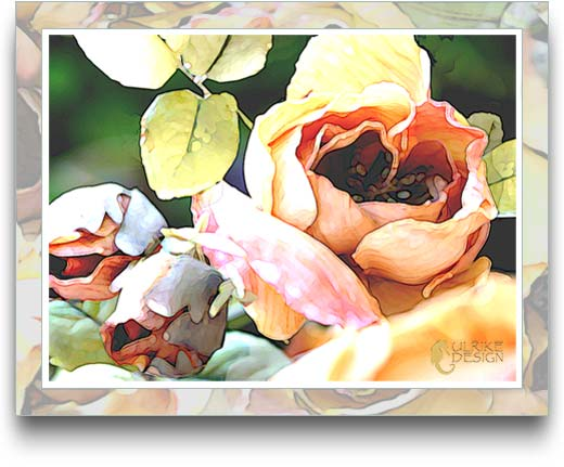 Rose blossoms and buds stylized.