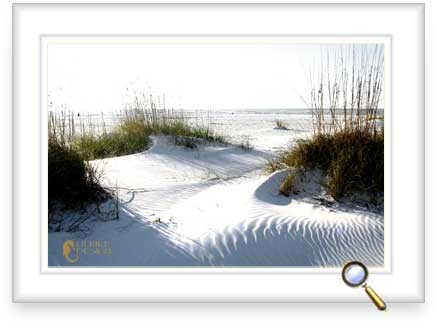Seaoats are the builders of dunes.
