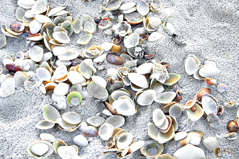 A wash of sea shells brought in by the tide.