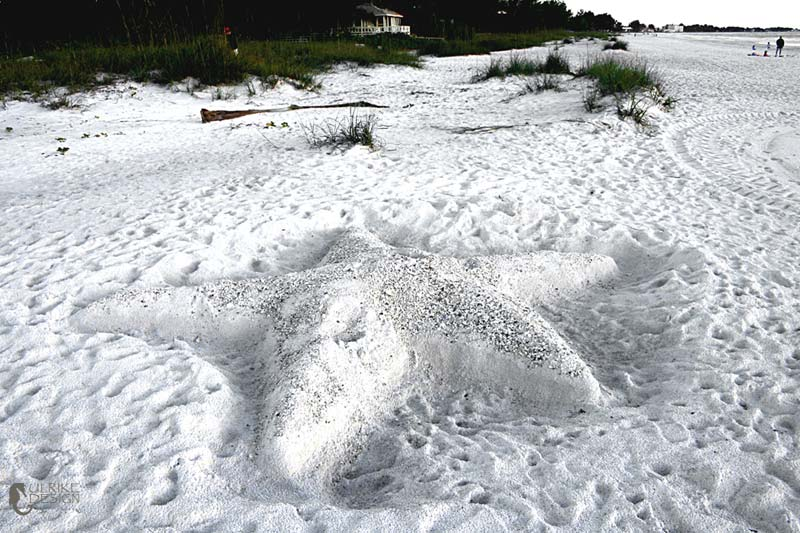 A huge sea star made from sand.