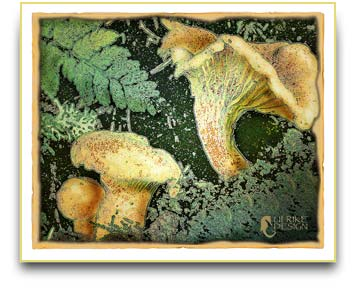 Chanterelle mushrooms illustration.